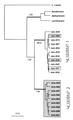 Larus armeniucus genetics.png