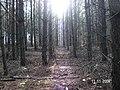 Las sonsowy ul.Kujańska - panoramio.jpg