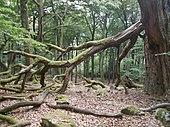 Laubwald im Nationalpark Hunsrück-Hochwald.jpg