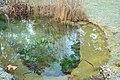 Le jardin botanique de Genève en hivers 01.JPG