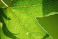 Leaf (2587272057).jpg