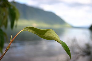 Earth religion - Image: Leaf at Rocky Point of Mc Donald Lake