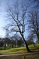Leaning trees - geograph.org.uk - 713869.jpg