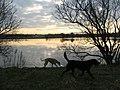 Levenhall Boating Lake near Musselburgh - geograph.org.uk - 915822.jpg