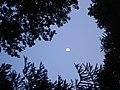 Lever de la lune - panoramio.jpg