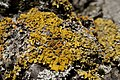 Lichen (5564112501).jpg