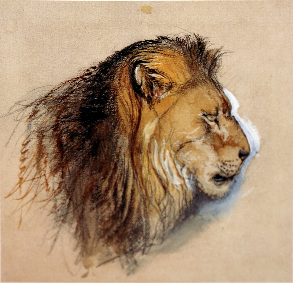 Lion's profile from life Ruskin