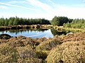 Loch on Muillbane Hill - geograph.org.uk - 695560.jpg