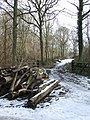 Log Pile - geograph.org.uk - 1153846.jpg