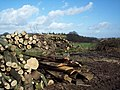 Log pile near Newtown - geograph.org.uk - 359341.jpg