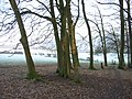 Looking out of Kitesgrove Wood - geograph.org.uk - 104592.jpg