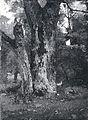 Lovis Corinth BC 1 Aweiderpark in Königsberg 1879 sw.jpg