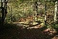 Loxhore, Smythapark Wood - geograph.org.uk - 275951.jpg