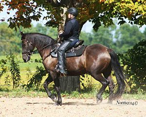 Western dressage - A horse and rider performing western dressage.