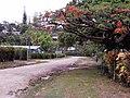 Luganville Back Street (23636294221).jpg
