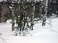 Lyovintsy, Kirovskaya oblast', Russia, 612079 - panoramio (70).jpg