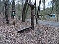 Máslovická stezka, Objímací strom, silnice 2428.jpg