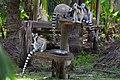 MG-naturpark-lemuren-3.jpg