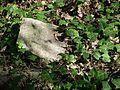 MOs810 WG 15 2016 (Pyzdry Forest II) (Michalinow Olesnicki, old ev. cemetery) (3).JPG