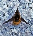 MS Insekt 183917.jpg