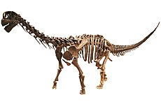 MUJA-Sauropod white background.JPG