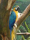 Macaw-jpatokal