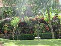 Madeira em Abril de 2011 IMG 1807 (5663669471).jpg