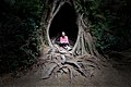 Maits Rest Rainforest Trail.jpg