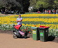 Man with pram, Floriade Canberra ACT.JPG
