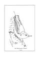 Manual of Bird Study 0029-8.png