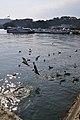 Matsushima 松島 - panoramio.jpg