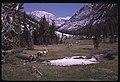 Matterhorn Canyon (04d9eef077e34efeb72d4a2fd79dfea0).jpg
