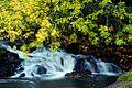 McKercher Falls (Linn County, Oregon scenic images) (linnDA0030a).jpg