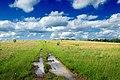 Meadow Walk (2) (8994280528).jpg