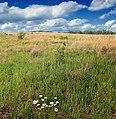 Meadow Walk (4) (8994304300).jpg