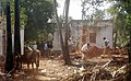 Members of an NGO clearing debris of broken houses to put new huts in Pulianchavadi near Pondicherry.jpg