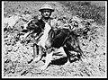 Messenger dog with its handler, in France, during World War I.jpg