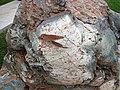 Metamorphosed pillow basalt (Ely Greenstone, Neoarchean, ~2.722 Ga; large loose block at Ely visitor center, Ely, Minnesota, USA) 12 (21461974351).jpg