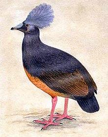 list of recently extinct bird species wikipedia