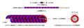 Mikrotubula007.PNG