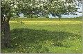 Minchinhampton Common in blossom - geograph.org.uk - 1631550.jpg