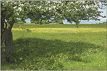 Minchinhampton Common in blossom - geograph.org.uk - 1631550.jpg