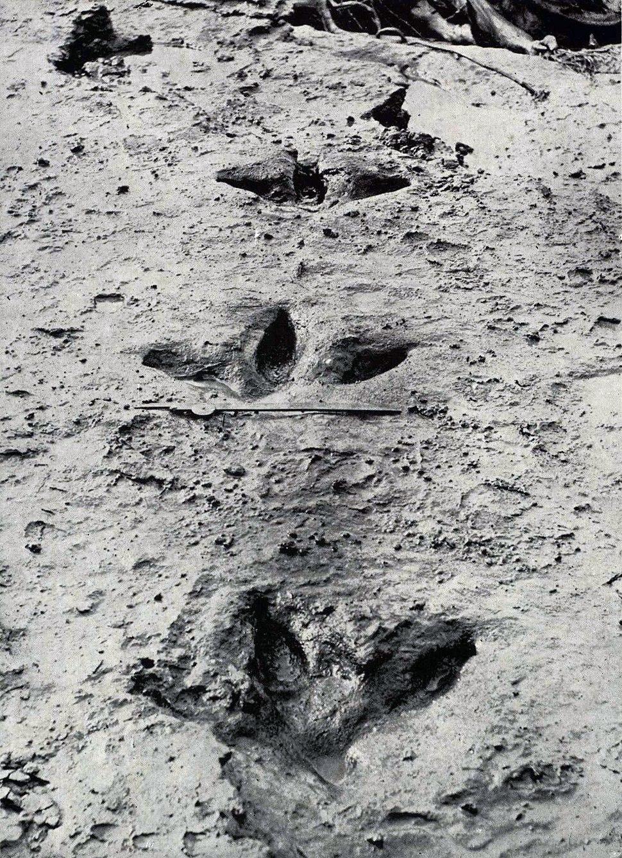 Moa footprints