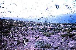 Seevogelkolonien auf Moku Manu