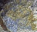 Molybdenite-pyrite (Precambrian; Homestake Mine, Lead, Black Hills, South Dakota, USA) 2 (19056786679).jpg