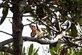 Monarch Butterfly Stinson Beach CA 2018-10-01 12-59-43 (31169725778).jpg