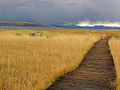 Mono Lake Boardwalk (2213776918).jpg