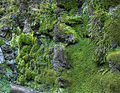 Moss and ferns (8061926806) (2).jpg