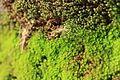 Moss on rock.jpg