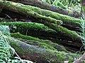 Mossy logs - geograph.org.uk - 76146.jpg